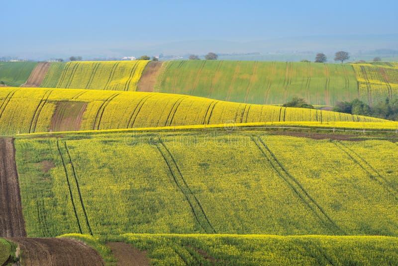 Kolorowi faliści wzgórza w Południowym Moravia zdjęcie royalty free