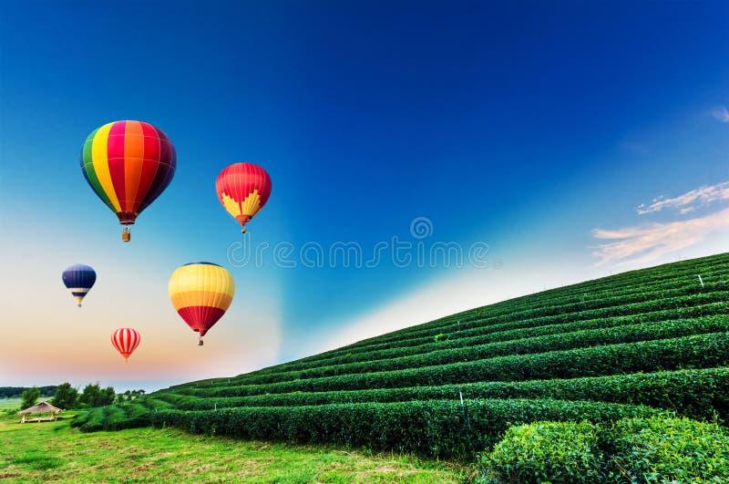 Kolorowi gorące powietrze balony lata nad herbacianej plantaci krajobrazem obraz royalty free