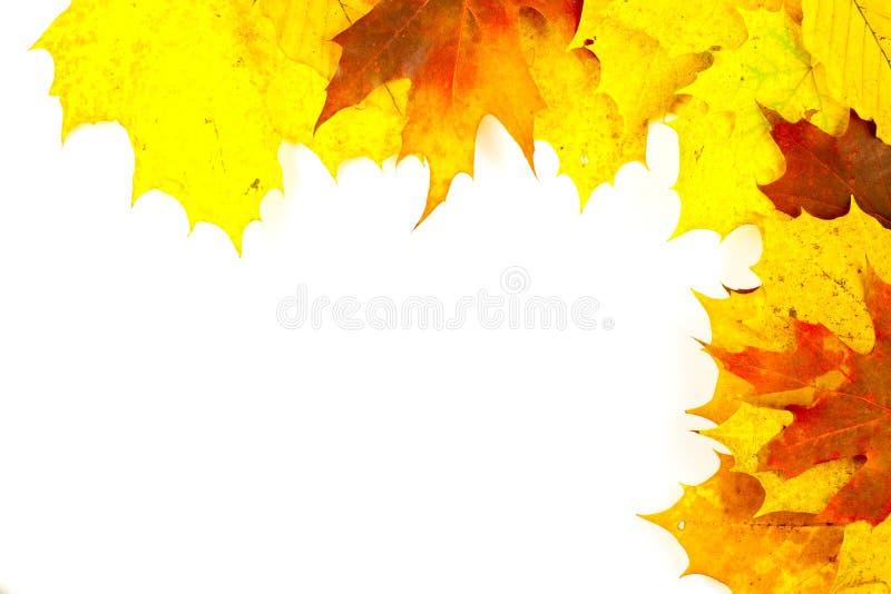 kolorowi jesień liść zdjęcie stock