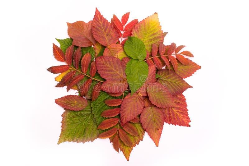 kolorowi jesień liść oceniać isolate zdjęcia stock