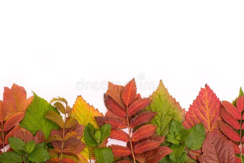 kolorowi jesień liść oceniać isolate obrazy stock