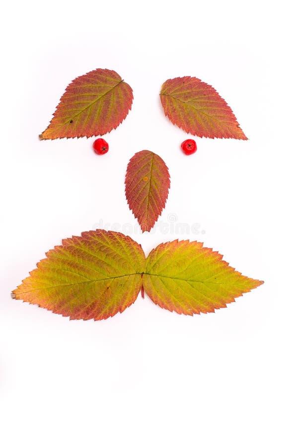 kolorowi jesień liść Twarz isolate obraz royalty free