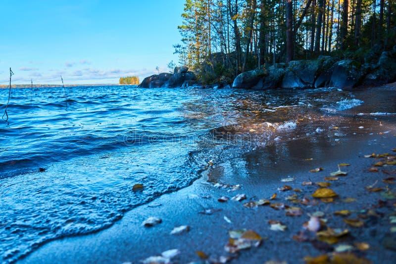 Kolorowi jesień liście na piaskowatym wybrzeżu jezioro zdjęcia stock