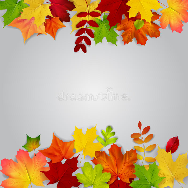 Kolorowi jesień liście na szarym tle royalty ilustracja