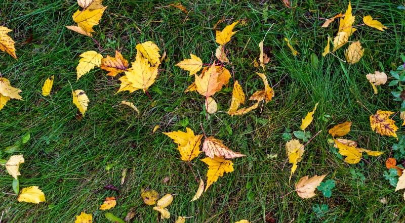 Kolorowi jesień liście na zmielonym jesieni tle zdjęcia stock