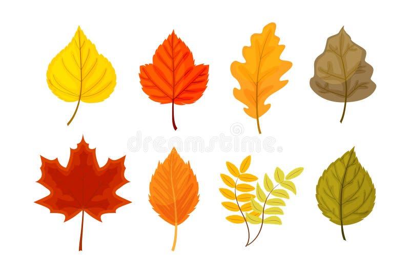 Kolorowi jesień liście ustawiają wektorową ilustrację odizolowywającą na bielu ilustracji