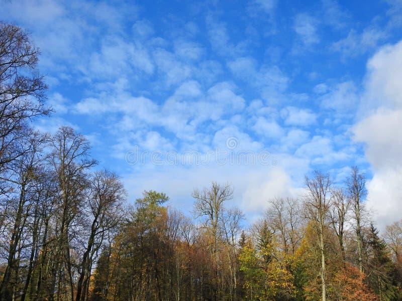 Kolorowi jesieni drzewa i piękny niebo, Lithuania zdjęcia stock