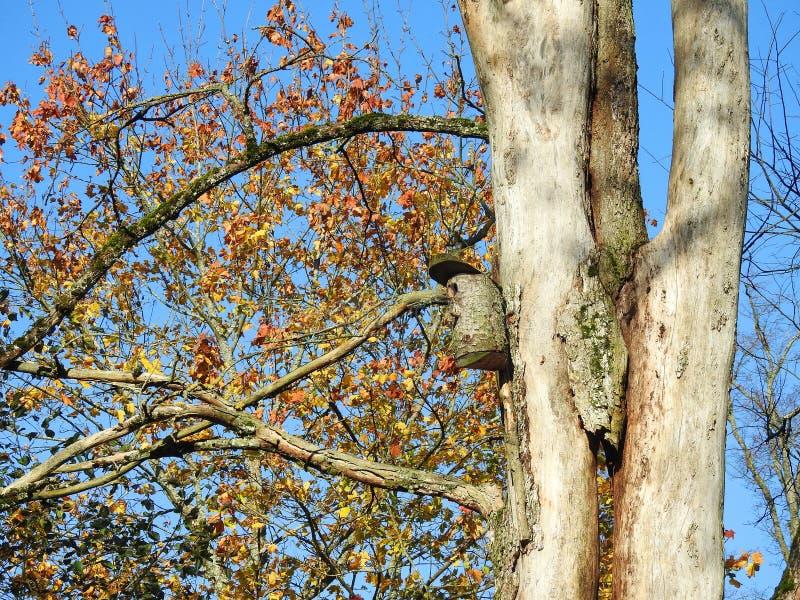 Kolorowi jesieni drzewa, Lithuania obraz stock
