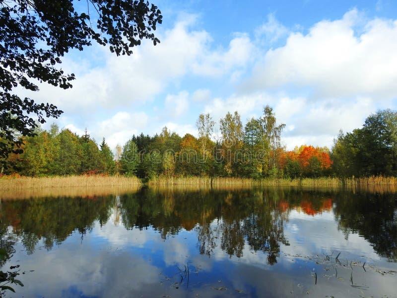 Kolorowi jesieni drzewa zbliżają jezioro, Lithuania zdjęcia stock