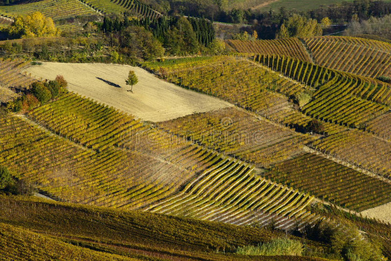 Kolorowi jesieni wzgórza Langa Piemonte Włochy fotografia royalty free