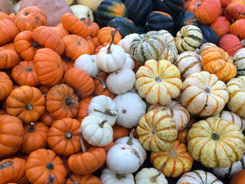 Kolorowi kabaczki i banie w gospodarstwo rolne rynku obraz stock
