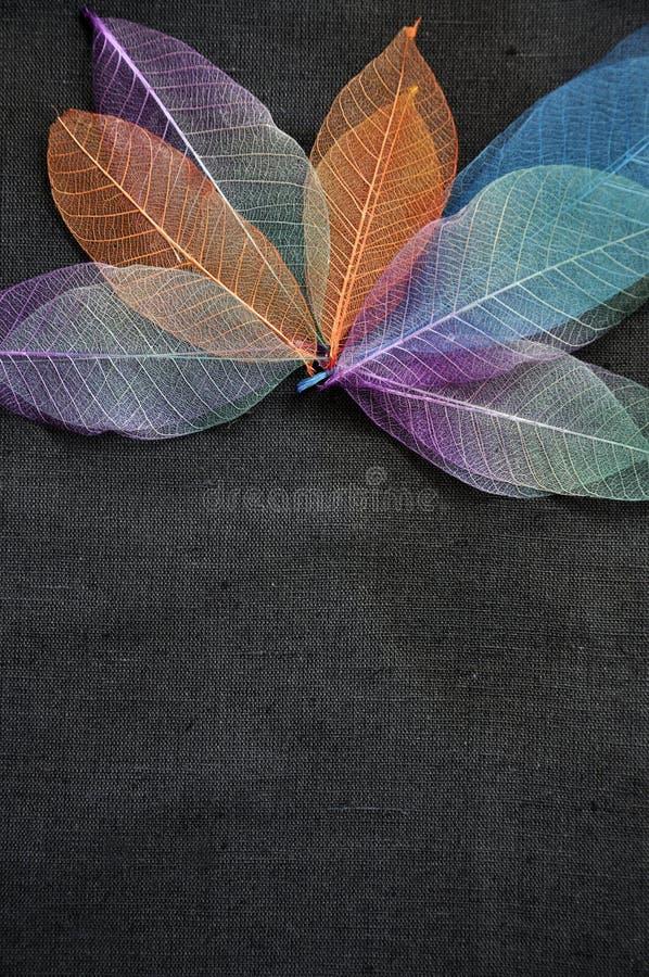 Kolorowi kośców liście z przestrzenią dla teksta zdjęcia stock