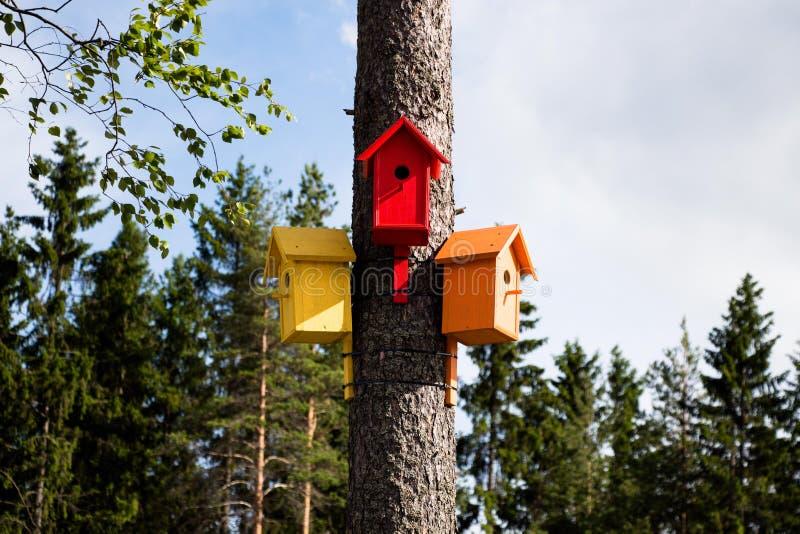 Kolorowi, kolorowi domy dla ptaków, zdjęcie royalty free