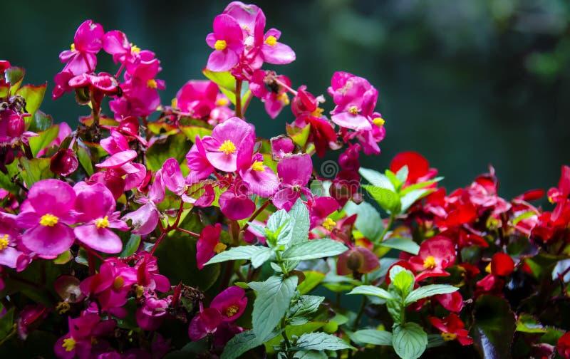 Kolorowi kwiaty obraz royalty free