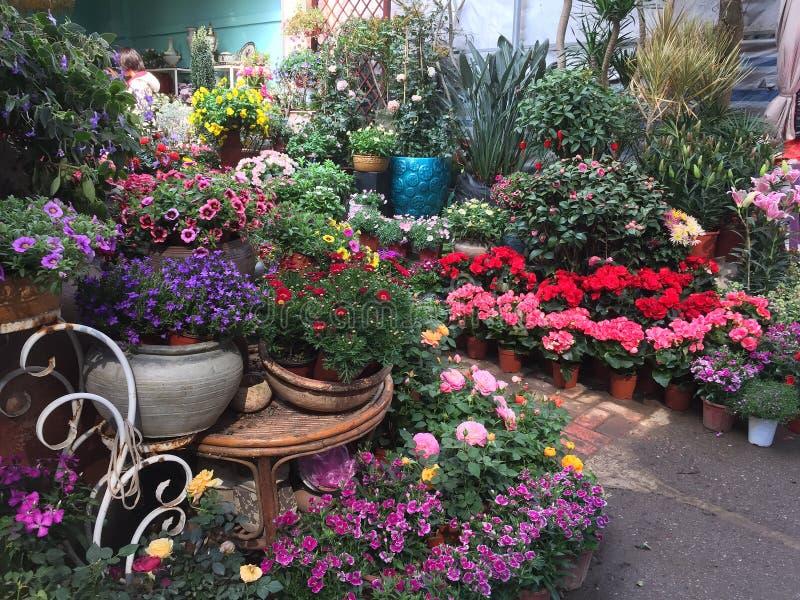 Kolorowi kwiaty dla sprzedaży przy sklepu Nanning miastem fotografia royalty free