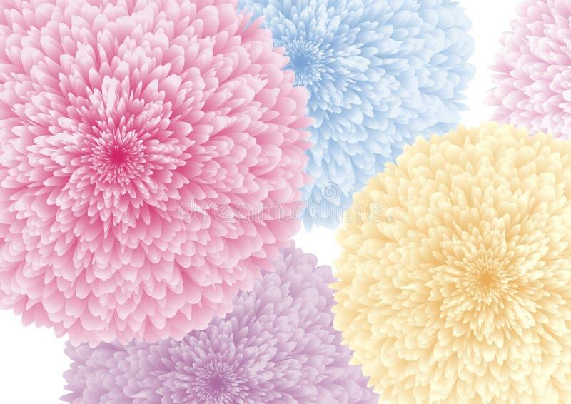 Kolorowi kwiaty na białej tło wektoru ilustraci royalty ilustracja