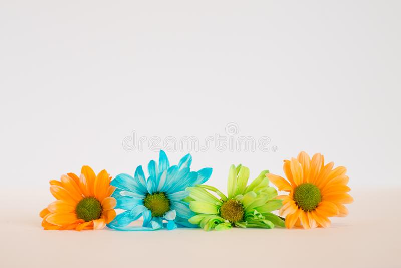 Kolorowi kwiaty odizolowywający obraz stock