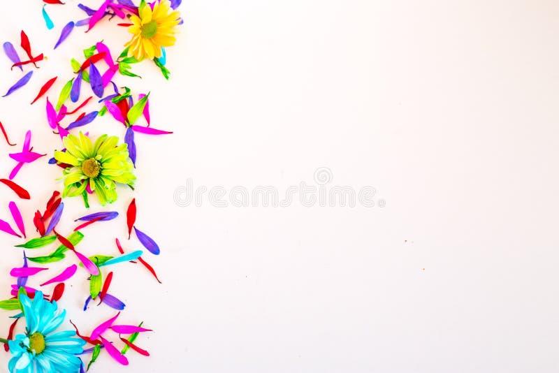 Kolorowi kwiaty odizolowywający zdjęcia royalty free