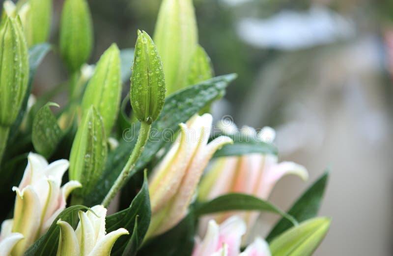 Kolorowi leluja kwiaty fotografia royalty free