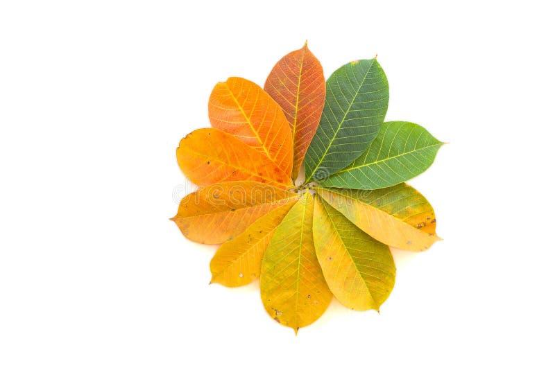 Kolorowi liście obrazy stock