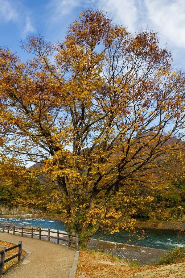 Kolorowi liście przy brzeg rzeki w jesieni fotografia stock