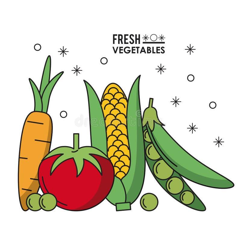 Kolorowi plakatowi świeżych warzyw marchwiani pomidorowi grochy i cob kukurudza ilustracji