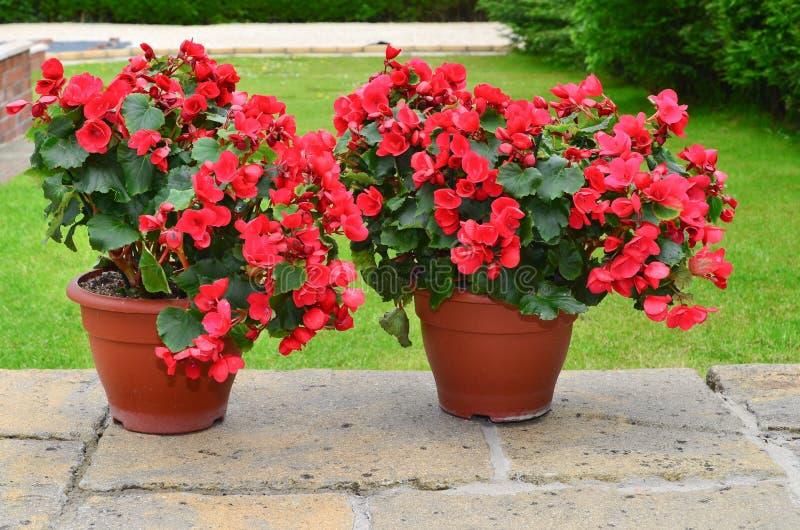 Download Kolorowi Plantatorzy Na Patiu Zdjęcie Stock - Obraz złożonej z britain, ogrodniczka: 53785364