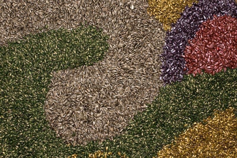Kolorowi słonecznikowi ziarna obrazy royalty free
