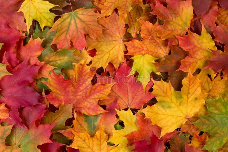 Kolorowi spadków liście obraz stock