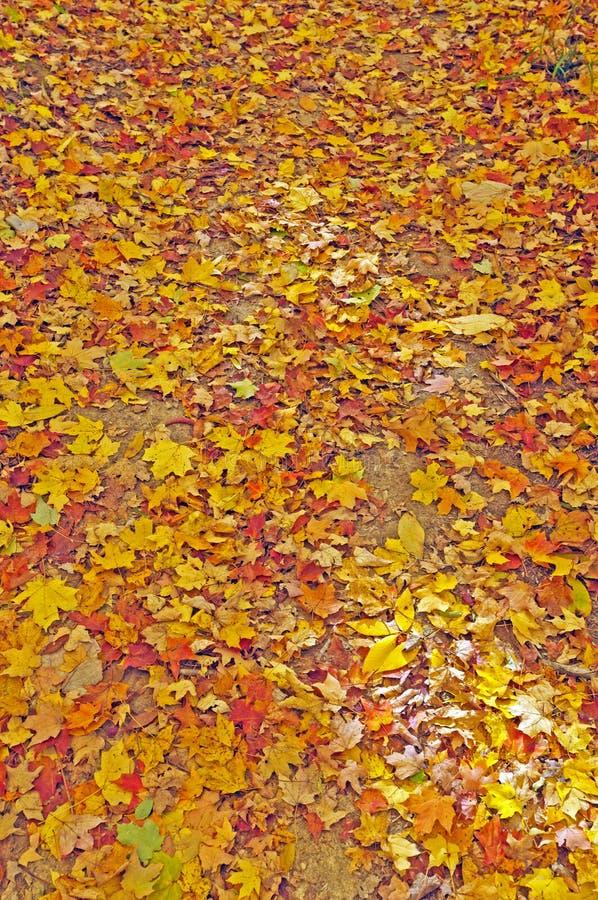 Kolorowi spadków liście na Lasowej podłoga obraz stock