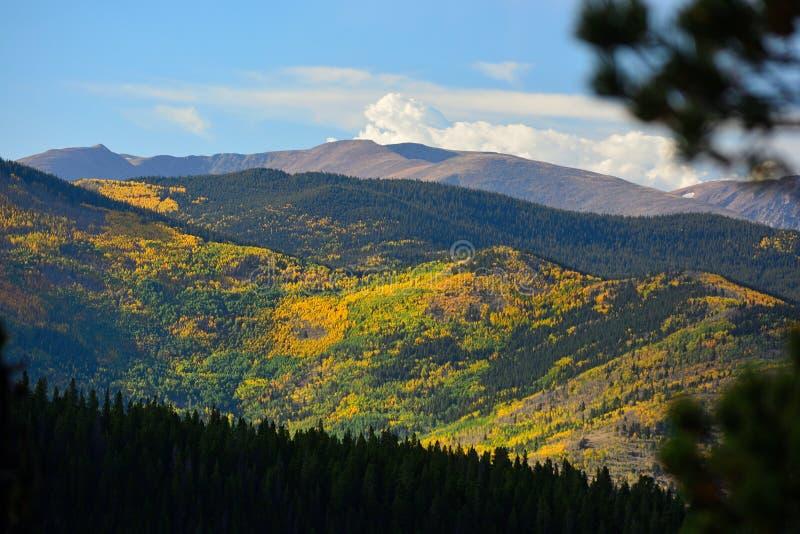 Kolorowi spadków liście od Osikowych drzew w Skalistych górach zdjęcia royalty free