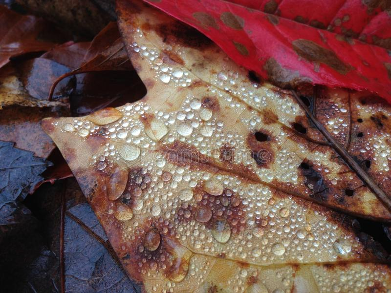 Kolorowi spadków liście z Wodnymi kroplami zdjęcie royalty free