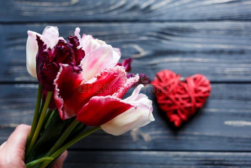 Kolorowi tulipany zamknięci w górę ręk na szarym drewnianym stole w Walentynki, wiosna, kobieta dzień, matka dnia tło Kwiecisty e fotografia stock
