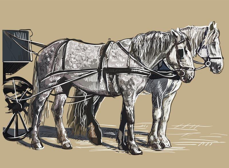 Kolorowi wektorowi nicielnica konie ilustracji