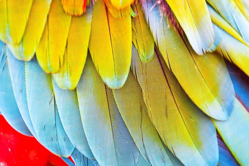 Kolorowy żywy zakończenie w górę jaskrawej egzotycznej Szkarłatnej ary papuzich ptasich piórek zdjęcie stock