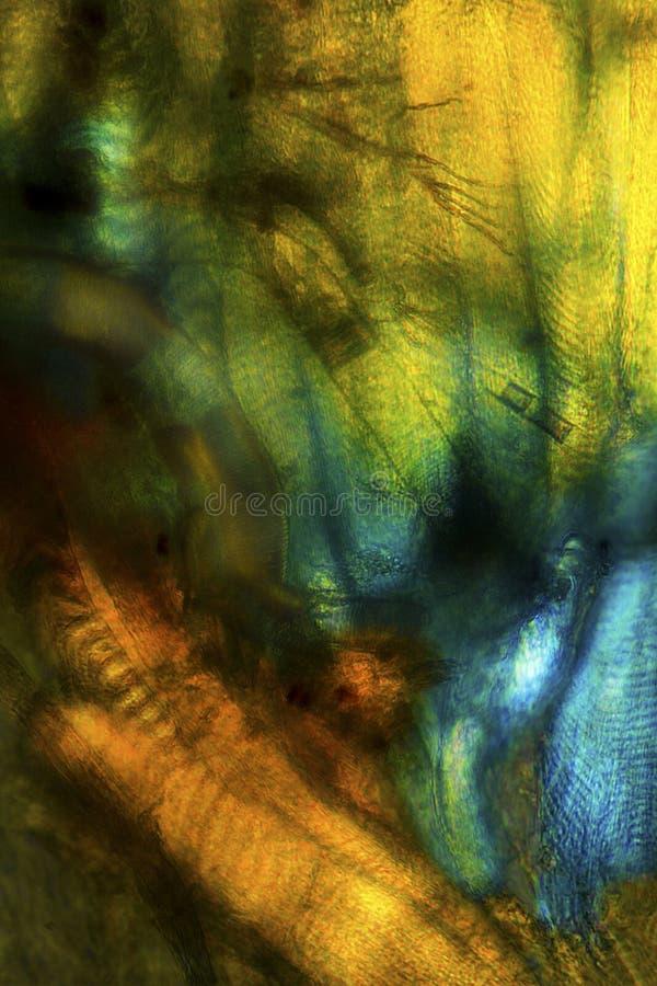 Kolorowy abstrakcjonistyczny micrograph, polaryzujący, mamrocze pszczół tkanki obraz royalty free
