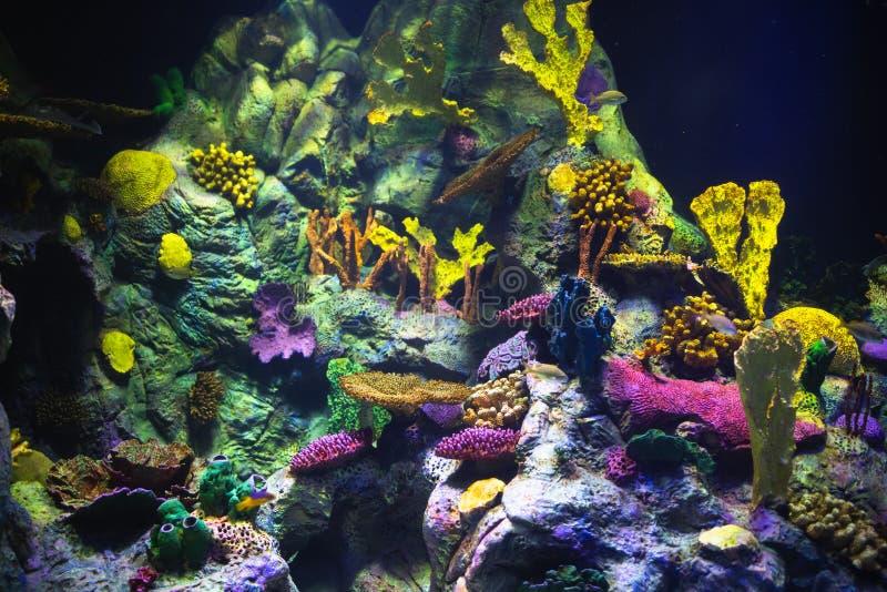 Kolorowy akwarium tło z podwodnymi roślinami obrazy stock