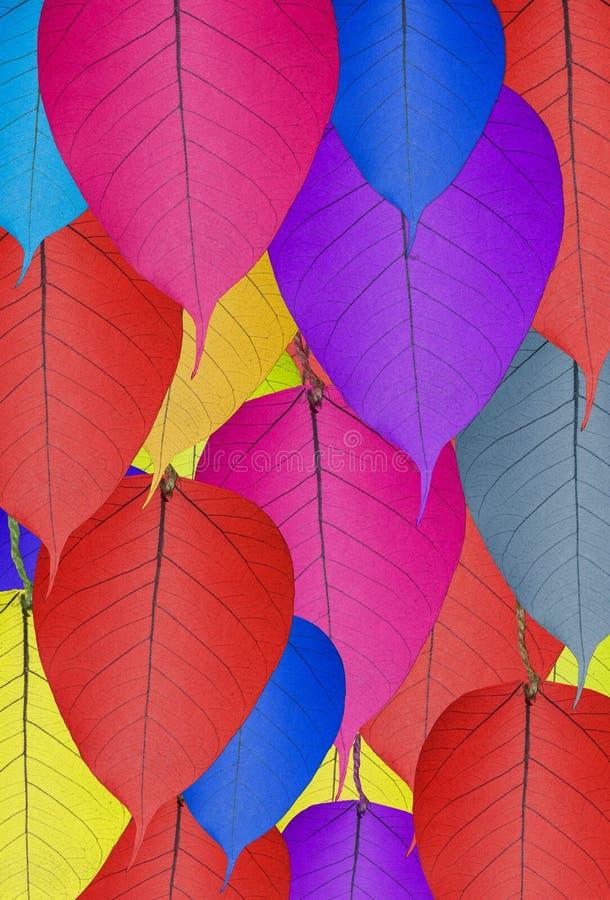 Kolorowy bodhi liścia bodhi liścia tekstury tło fotografia royalty free