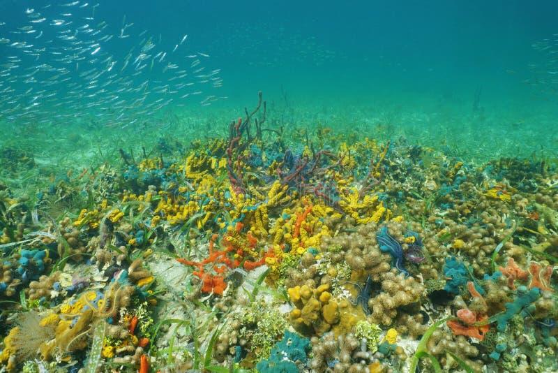 Kolorowy denny życie na ocean podłoga zdjęcie royalty free