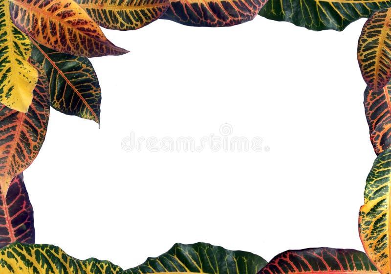 Kolorowy deseniowy liść tropikalny zdjęcie stock