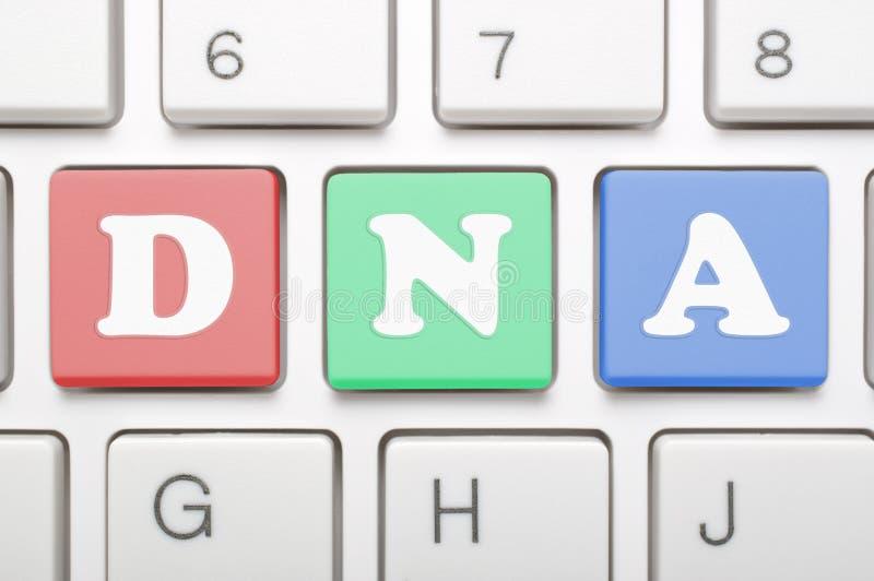 Kolorowy DNA klucz na klawiaturze fotografia royalty free