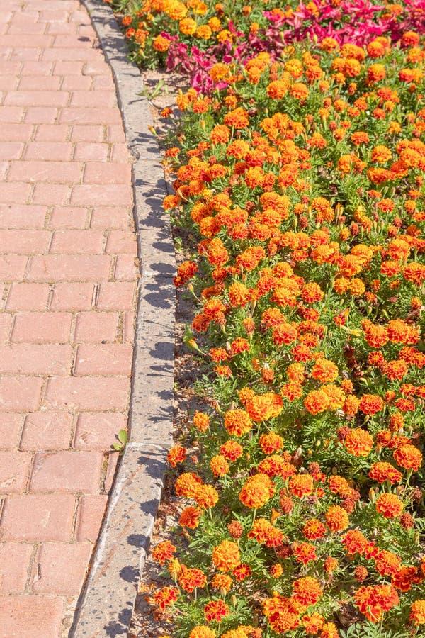Kolorowy flowerbed i chodniczek w miastowym projekcie obraz stock