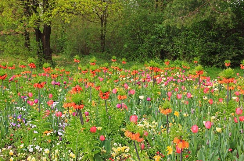 Kolorowy flowerbed z frutillaria, raju ogród fotografia royalty free