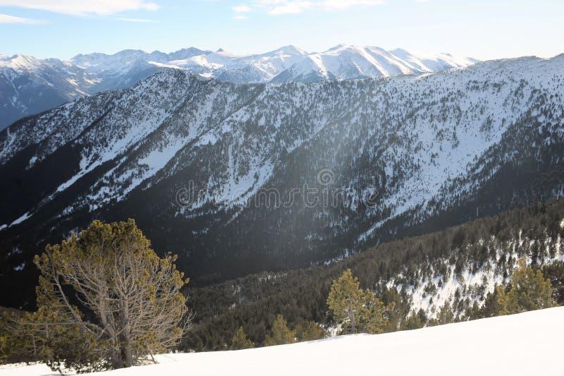 Kolorowy góra krajobraz - góry zakrywać z śnieżnym i porosłym z jedlinowymi drzewami, Vallnord, ksiąstewko Andorra, Europa obraz stock