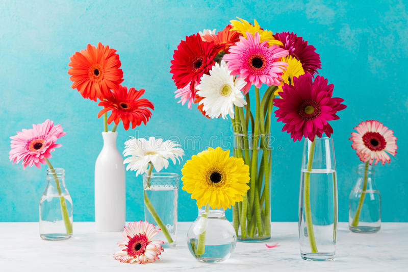 Kolorowy gerbera kwitnie w szklane wazy i butelki Błękitnego kamienia tło zdjęcia stock