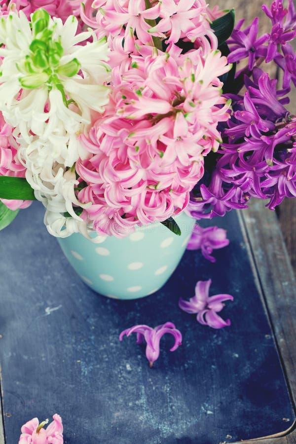 Kolorowy hiacynt kwitnie w polki kropki filiżance zdjęcie stock