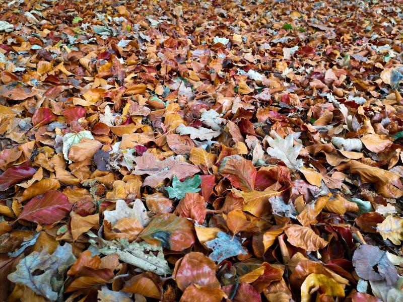 Kolorowy jesień dywan spadać liście na ziemi w miasto parku obraz stock