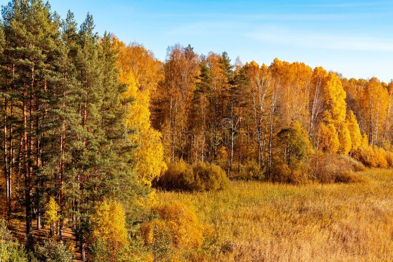Kolorowy jesień krajobraz, jaskrawe farby Indiański lato w lesie - wizerunek zdjęcia royalty free