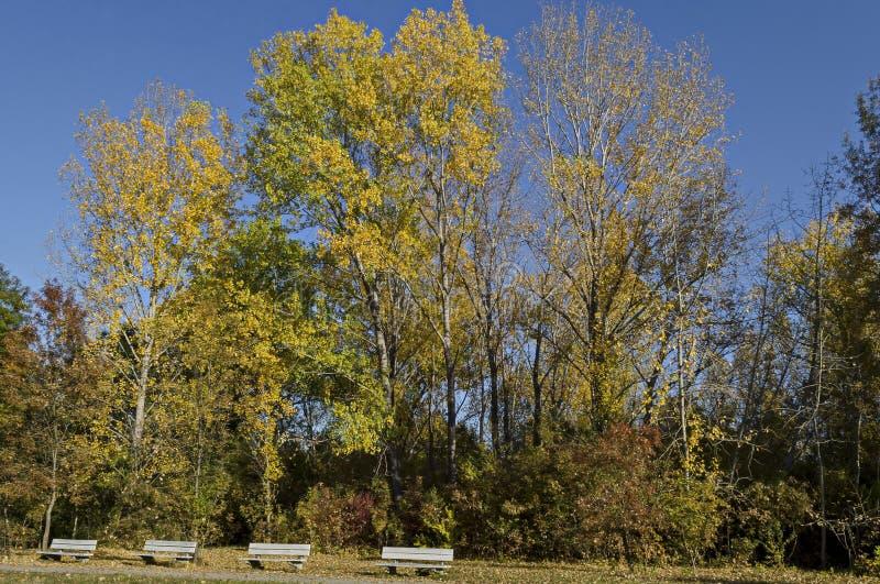 Kolorowy jesień krajobraz jesienny las z halizną i ławka w Południowym parku obraz royalty free