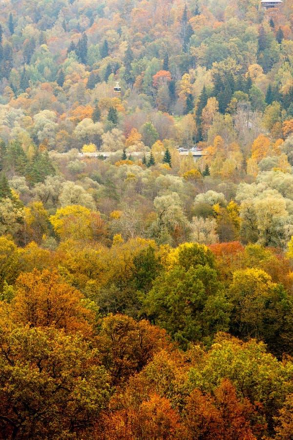 Kolorowy jesień lasu krajobraz, textured tło obrazy royalty free